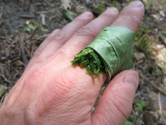 12 Survival Hacks Using Just Leaves - Skills to Know for Camping, Hiking, Wilderness Outings...