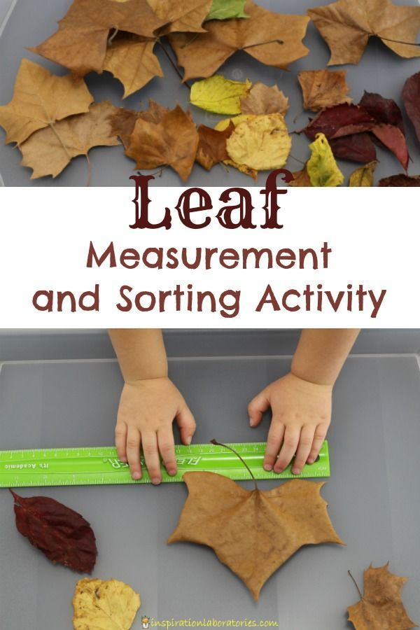 Leaf Measurement and Sorting Activity inspired by Red Leaf, Yellow Leaf by Lois Ehlert