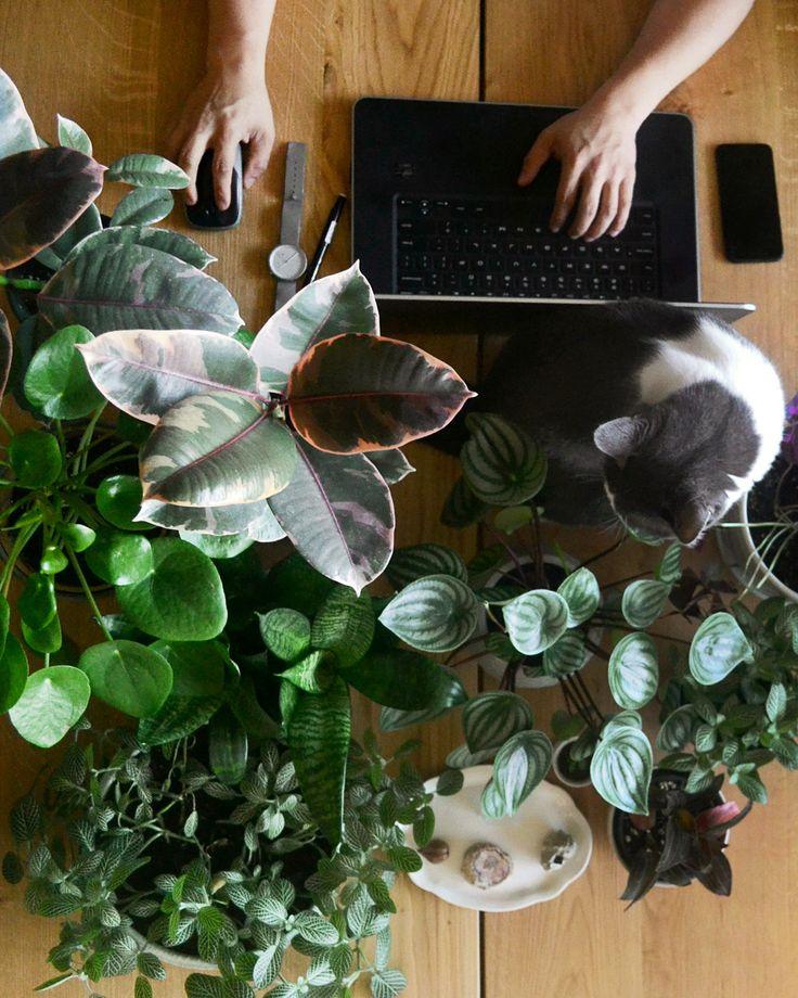 Árvore-da-borracha (Ficus elastica), planta-mosaico (Fittonia), Pilea peperomiodes, peperômia (Peperomia argyreia), azedinha (Oxalis triangularis), lança-de-são-jorge (Sansevieria) e orquídea ludisia (Ludisia discolor).
