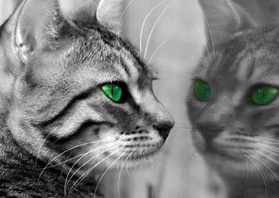 Cat #postcards #greeneyes