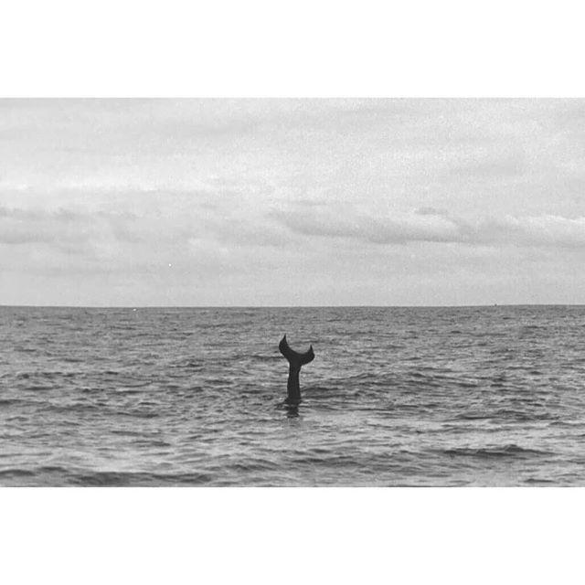 LENDAS EXISTEM   Dia 4 de Abril,  13h na UFRJ. Fotografia: @gessicahage #lendasexistem #fish #fisherman #fishing  #wave #fluid #beach #design #art #analog #35mm #ship #boat #lomo #lomography #swimming #mermaid #sailor #capitan