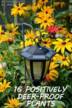 DesignDreams by Anne: 16 Positively Deer Proof Plants