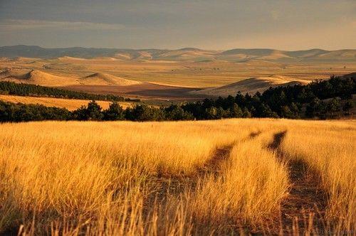 The landscape of Southeastern Romania