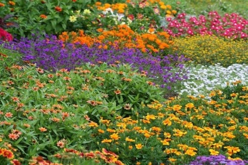 Garden Design traditional landscape: Design Traditional, Cottages Gardens, Beautiful Colors, Flowers Colors, Traditional Landscape, Chicago, Flower Colors, Gardens Design, Photo