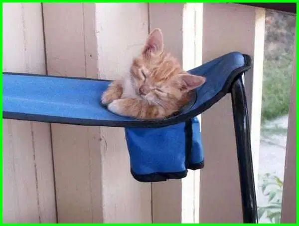 Gambar Kucing Tidur Lucu godean.web.id
