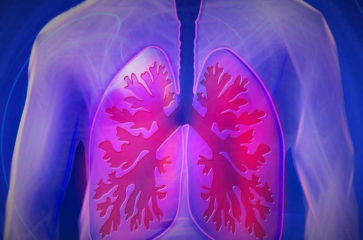 Experimenten met muizen suggereren dat onze longen een belangrijke nevenactiviteit hebben: bloedplaatjes produceren. Aangenomen werd altijd dat bloedplaatj