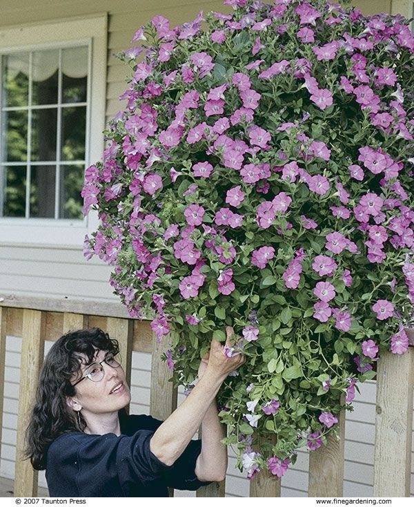 Growing Hanging Flower Baskets : Best hanging baskets images on gardening