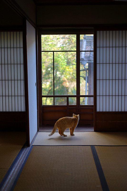 秋の尾道散歩 | Flickr - Photo Sharing!