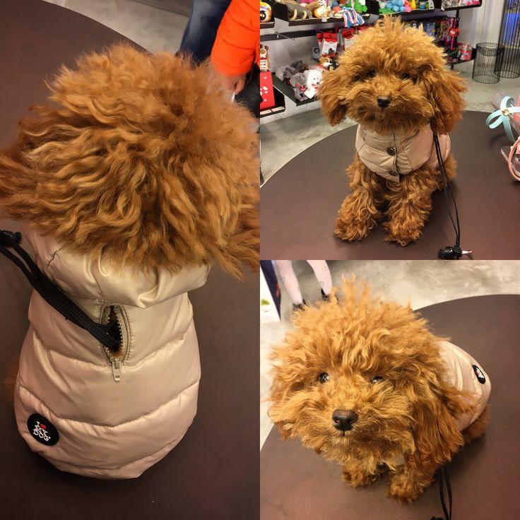 Per questo inverno Chloe ha scelto @ilovemydog_official  #treviso #minupetshop #ilovemydog