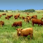 *** Grass Fed Beef - Healthy or Hype? Great article on importance of consuming only grass fed beef