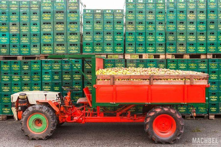Paquito con manzanas Llagar en Asturias by machbel