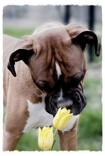 Stop and smell the tulips?