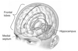 Henry Molaison - His epilepsy was cured by removing his hippocampus but memory was lost forever