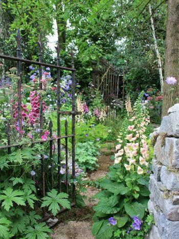 Vingerhoedskruid doet het goed in de schaduw! Meer tips voor de schaduwtuin vind je op Woonblog.