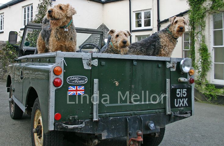 Dogs taking a ride in a Land Rover