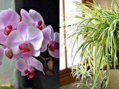 12 rostlinek, které jsou speciálně určené do kuchyně. Nejenže jsou krásné a rozzáří Váš byt, navíc jsou i velmi užitečné!