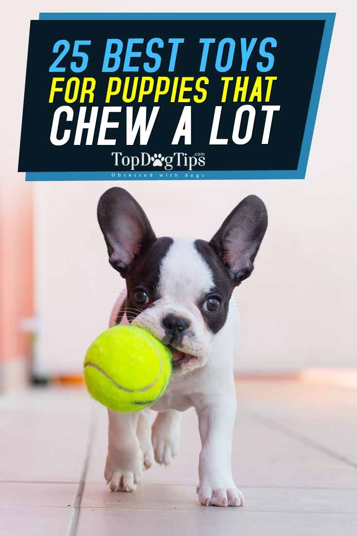 Top 25 Best Puppy Toys for Dogs that Chew A Lot. The best strategy to keep a dog…