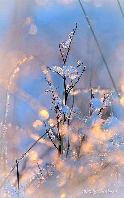 Winterwonderland#. Décor# d'hiver# sous la neige. Photo by Helgi Skulason