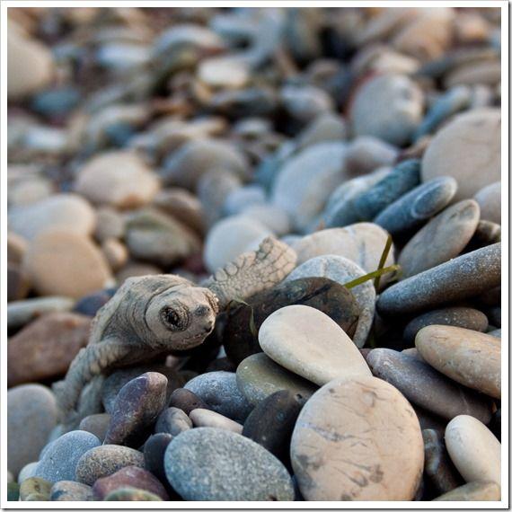 Baby Sea Turtle in Turkey