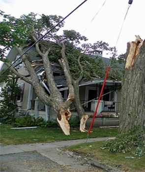 Visit us for specials on tree trimming and removal. http://www.goodguystreeservices.com/tree-removal-austin/
