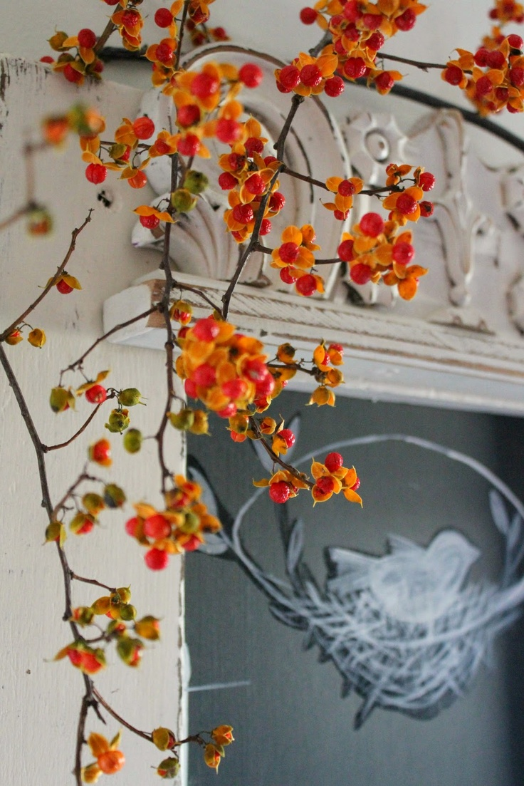 Wish i could find or buy bittersweet branches in our area don t - Decorate Mantle Over Front Door With Bittersweet Vine And Branches