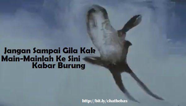 #KBRPagi #kabarburung  http://bit.ly/chatbebas