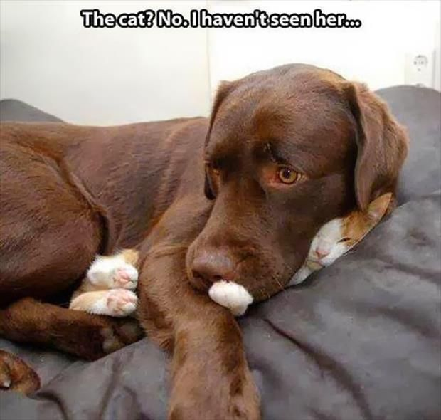 So cute! Dump A Day Attack Of The Funny Animals - 60 Pic
