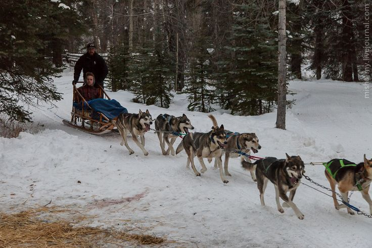 Фото - путешествия по миру: США. Ездовые собаки в Колорадо