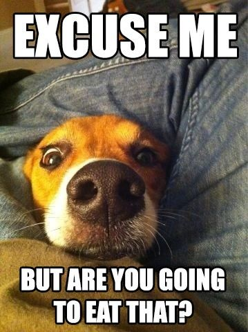 Funny Dog Captions - are you going to eat that