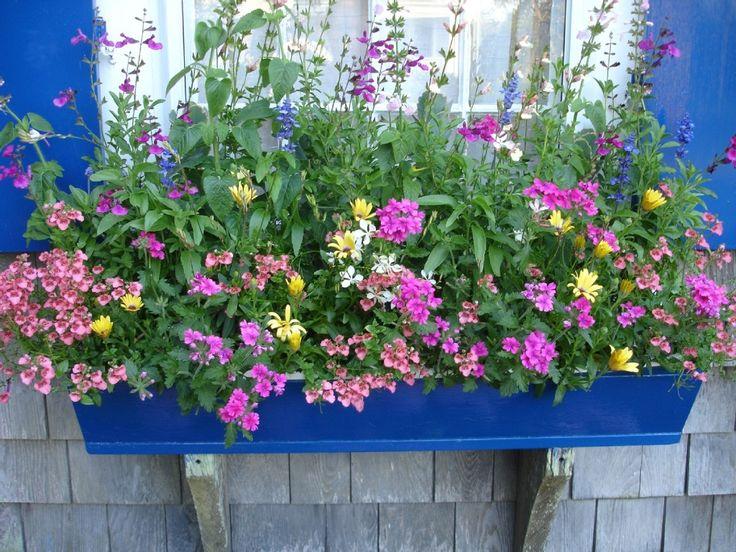 Brant Point Cottage Rental: Charming Brant Point Rose