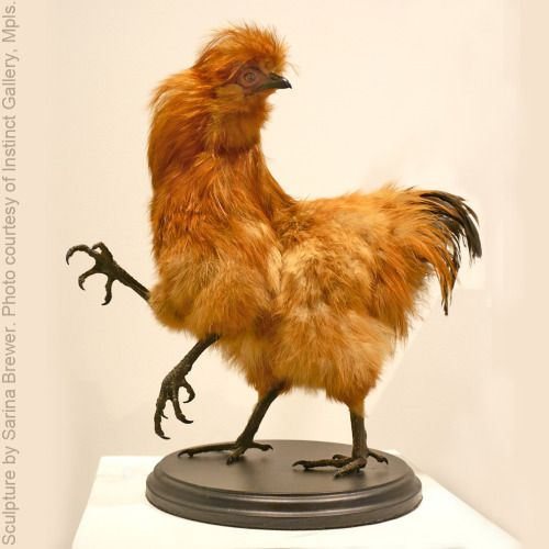 """""""Chernobyl Chicken"""" is an environmental commentary taxidermy sculpture by artist Sarina Brewer; An absurd looking piece about the absurdity of what we are doing to the environment, and hence to ourselves, in the name of technological """"advancement"""". When we dump contaminants into the ecosystem and food chain, we are dumping them into our own bodies. Learn more about this artist and her pioneering work at https://www.facebook.com/Rogue.Taxidermy.Art/ #Rogue #Taxidermy #Art"""