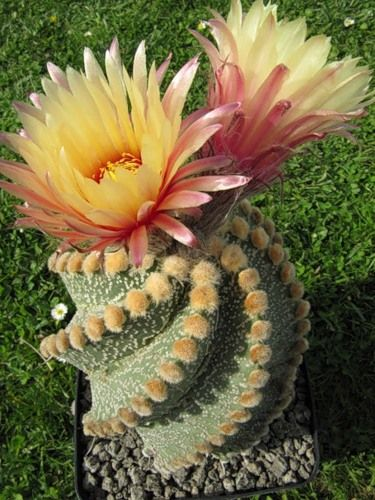 Cactus The most beautiful varieties and how to keep them healthy