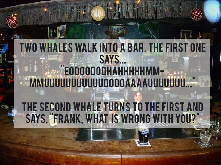 Best Jokes That Are So Stupid Theyre Actually Funny Images - 21 jokes awful theyre actually funny