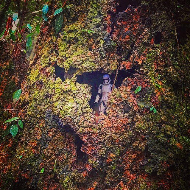 宿なしトルーパー越冬編 エピソード希望の光 寒風ふきさぶ冬の森でなんとか生き延びている宿なしトルーパー 昼は脱出用イカダの製作のための良質な枯枝集め夜は樹木の洞に身を潜め風を凌ぐ日々が続いている たまに差し込む太陽の光が彼の折れてしまいそうな心を払拭してくれている #スターウォーズ #スターウォーズフォースの覚醒 #スターウォーズ最後のジェダイ #ストームトルーパー #トルーパー #フィギュア #山 #洞 #森 #空 #雪 #冬 #sun #sunshine #tree #snow #winter #forest #nature #mountain #starwars #stormtrooper #c3po #r2d2 #kyloren #atat #captainfazma #japan