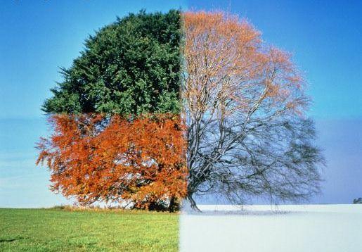 time lapse season tree