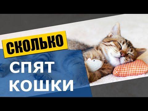 Сколько спят кошки - Удивительные факты о кошках - YouTube