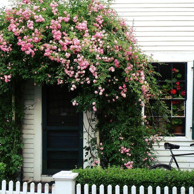 Как же все таки размещают растения в вертикальном озеленении? Для размещения растений в вертикальном озеленении требуется установка специальных опор. Для плавающих лиан – это всевозможные решетки, каркасы, трельяжи, шнуры, планки. Для вьющихся лиан опоры не должны плотно прилегать к стенам, так как им необходимо пространство для свободного движения верхушки побега.