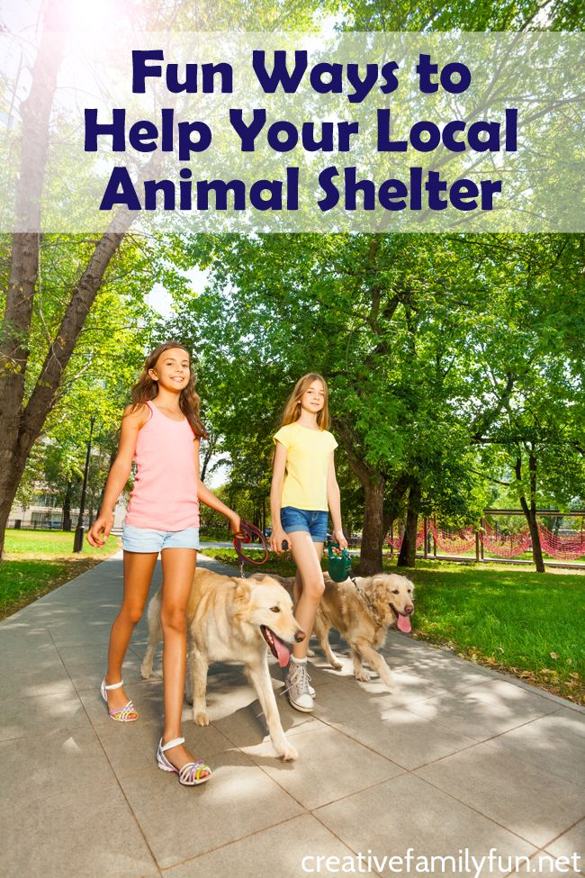 Fun Ways To Help Your Local Animal Shelter Animal Shelter Animals Fun