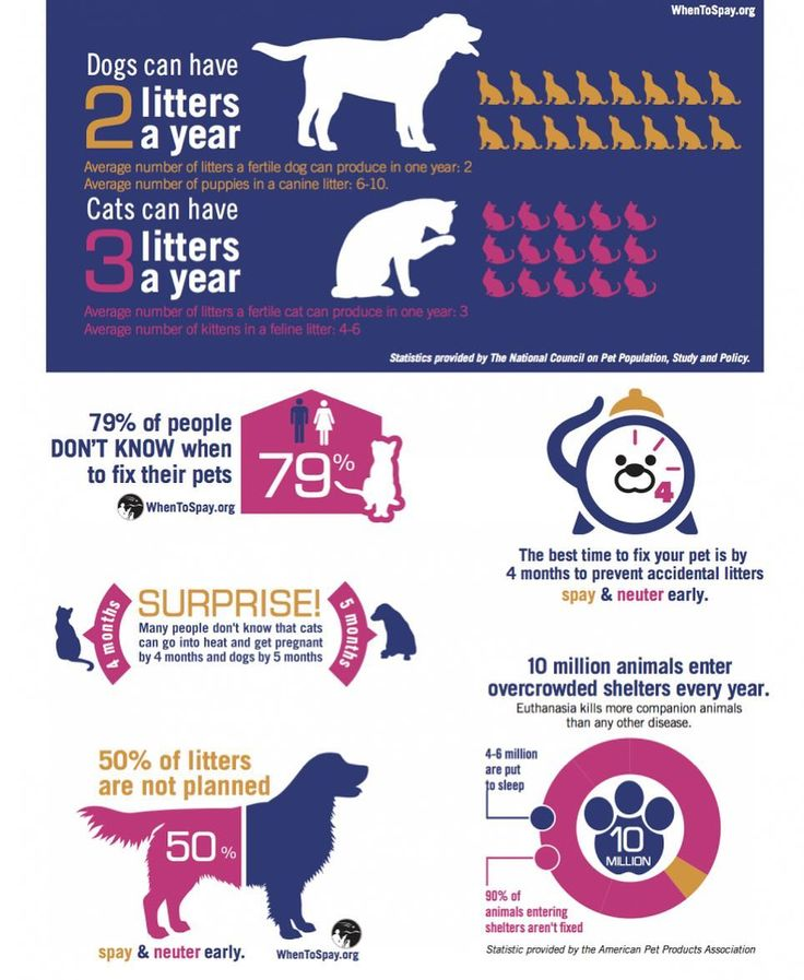 February is spayneuter awareness month spaying or