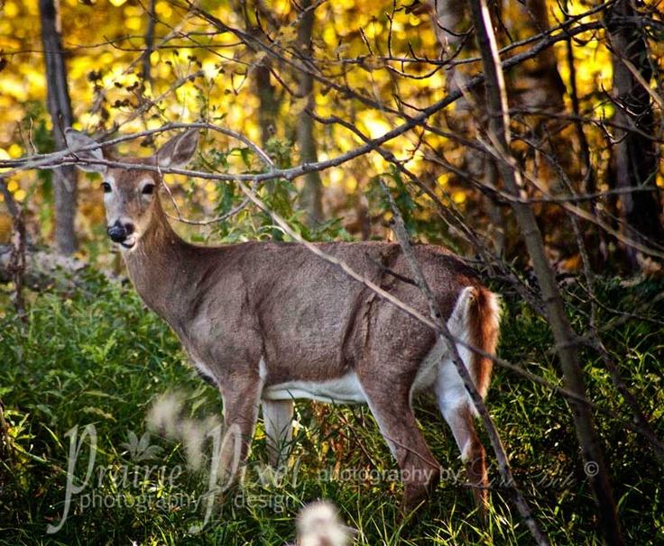 Deer in Autumn
