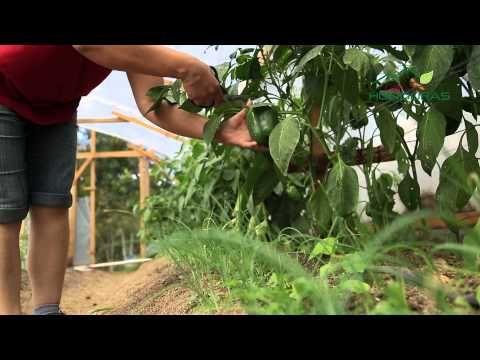 Del Corazón de Sus Montañas y del Alma de su Gente-Café de Honduras - YouTube