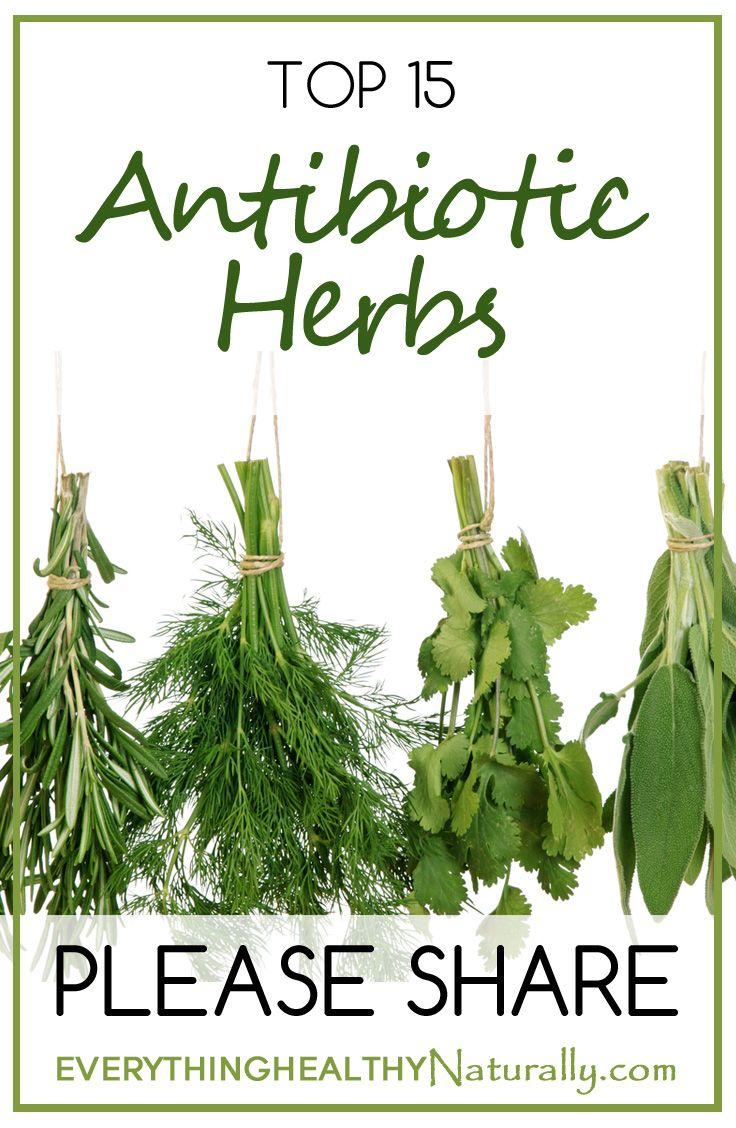 Top 15 Antibiotic Herbs