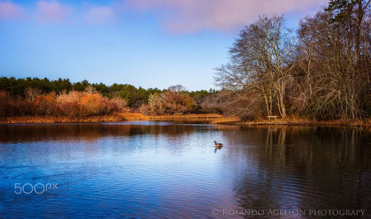Lake reflection - Lake reflection taken last year in Long Island NY, in a wildlife sanctuary