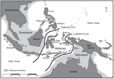 Map showing the location of Flores relative to the Wallace Line and Lydekker's Line and the Pleistocene coastlines of the Asian and Greater Australian continents.