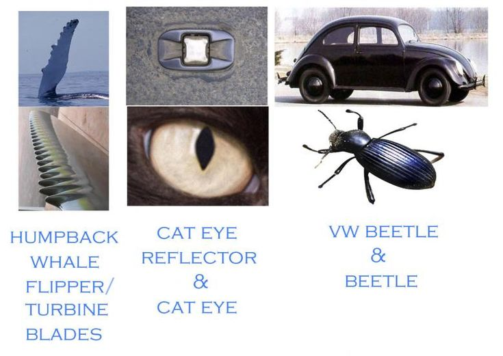 Biomimicry Examples   Google Search