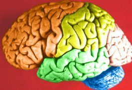 The frontal lobe area of your brain is located directly behind your forehead. This lobe area helps with your impulse control, language, divergent thinking, mental flexibility, memory, spontaneity, motor function, problem solving and decision making, according to Centre for Neuro Skills. Frontal lobe injury activities concentrate on improving and...