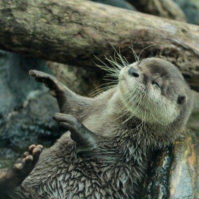 In Otter News on Twitter