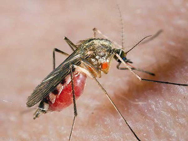 Резко вырос спрос на магнитные антимоскитные шторы http://kmabiz.org/7YMFVa/promo :::: Готовимся к появлению кровососущих!!!