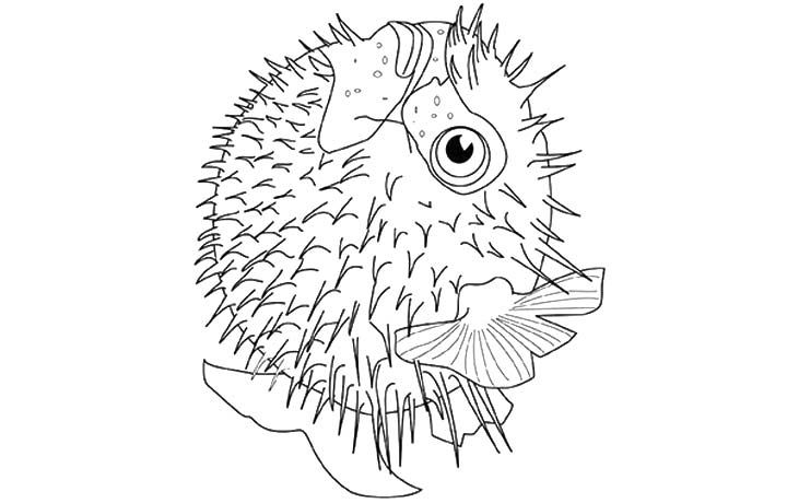 7 Best Pufferfish Blowfish Images On Pinterest