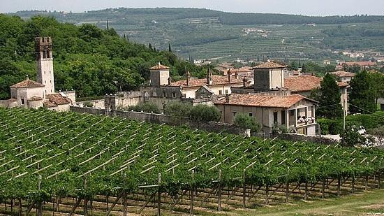 Vitigni in Valpolicella   http://www.agriturismo.st/it/italia/Strada-del-Valpolicella/